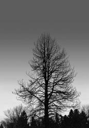 These dark woods beckon... by thewolfcreek