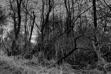 Vast marshlands... by thewolfcreek