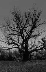 Here be the black tree... by thewolfcreek