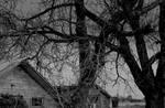 Shadow of specters... by thewolfcreek