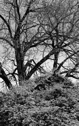 Hidden from the light... by thewolfcreek