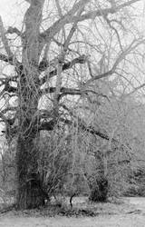 Otherworldly sentinels... by thewolfcreek