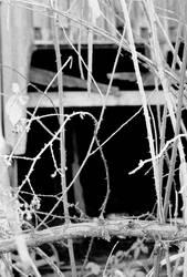 The dark... by thewolfcreek