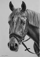 Arabian horse in graphite by Odette1994