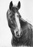 Horse portrait by Odette1994