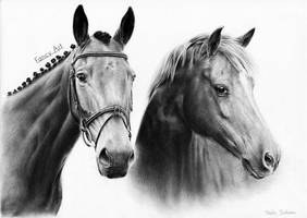 Two horses by Odette1994