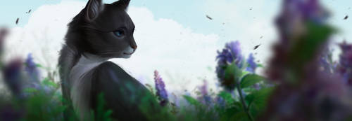 Cinderpelt by VardasTouch
