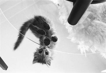Prettie Kittie by WhisperzofPain