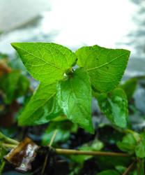 leaves in rain. by lycheese