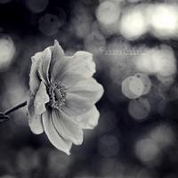 Souls around me. by OliviaMichalski