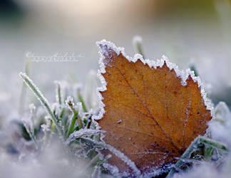 When the cold days start. by OliviaMichalski