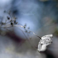 Sleepwalking. by OliviaMichalski