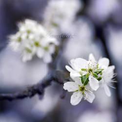 When spring awakes. by OliviaMichalski