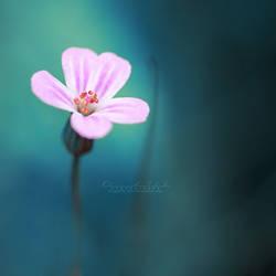 Into the Blue.. by OliviaMichalski