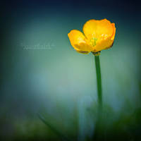 Flower Waltz. by OliviaMichalski