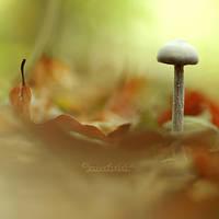 Golden Autumn. by OliviaMichalski