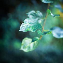 Silence. by OliviaMichalski