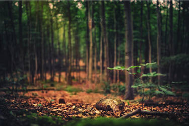 Whispers in the Forest. by OliviaMichalski