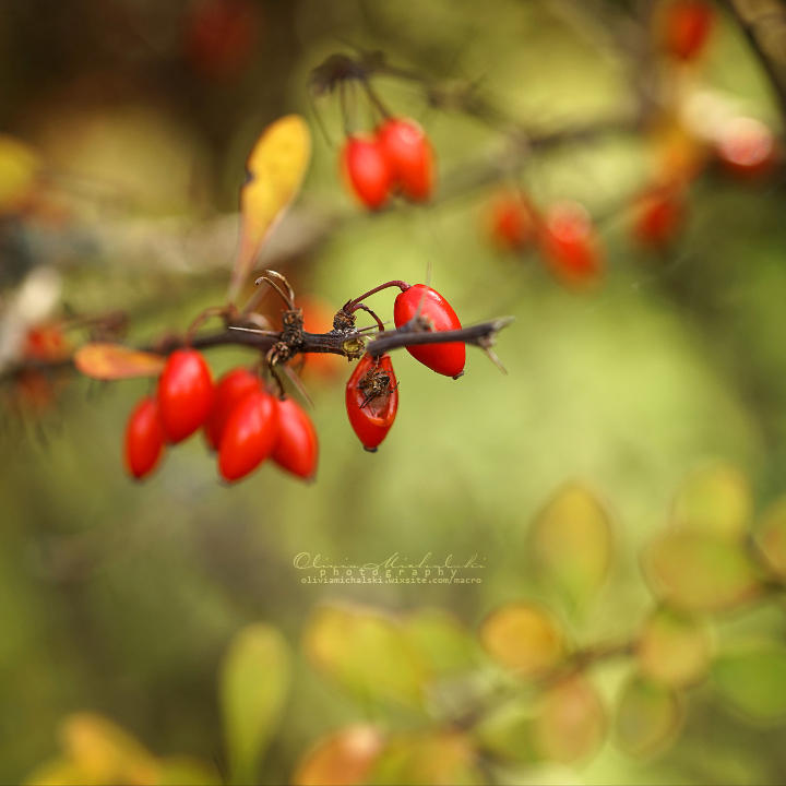 In the Middle of Autumn. by OliviaMichalski
