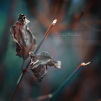 Dark Autumn. by OliviaMichalski