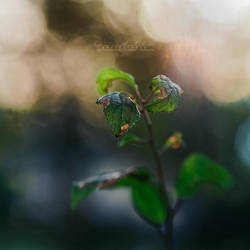 Dreamy Morning. by OliviaMichalski