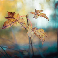 An Ode to Autumn. by OliviaMichalski