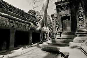 Cambodia - Ta Prohm by lux69aeterna
