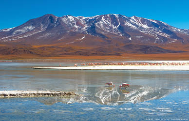 Bolivia | A Thousand Flamingos by lux69aeterna