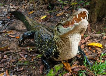 Ecuador   Predator by lux69aeterna