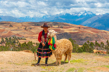 Peru   Sacred Valley Alpaca by lux69aeterna