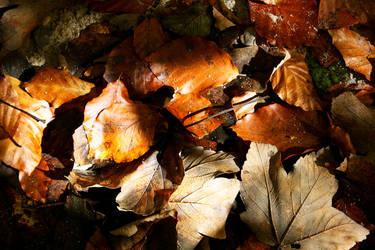 Autumn by Sokyu