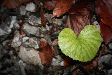 Fall in Love by Sokyu