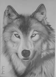wolf by degeniodesenhos