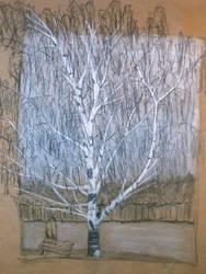 The Birch by omava