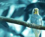 Blue world ... by aoao2
