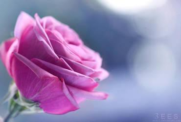 Petals ... by aoao2