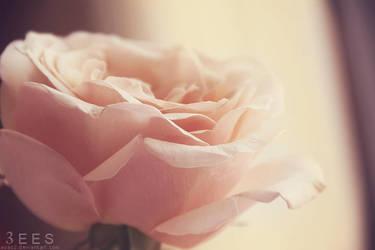 Soft beauty ... by aoao2