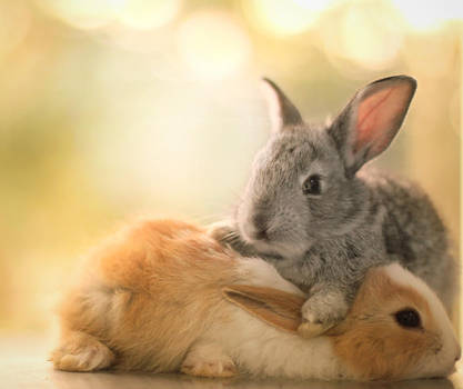 Best friends ... by aoao2