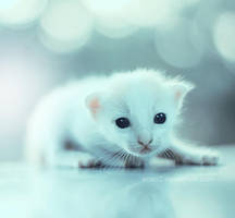 Baby eyes ... by aoao2