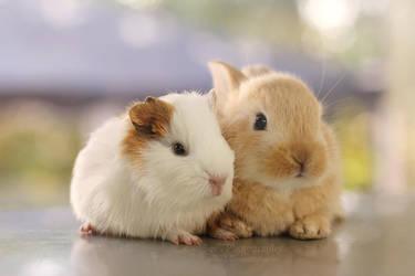 Best friends by aoao2