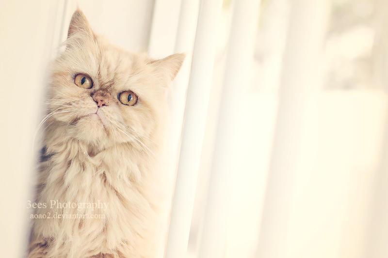 Kitty cat by aoao2