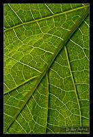 Veins by Bruinen