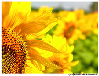 Beyond the Sunflowers by cyclopsmine