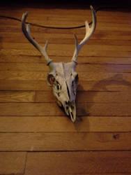 Deer skull by TheAwesomeAlex3