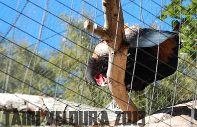Zoo 12 by tamiveldura