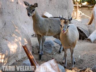 Zoo 15 by tamiveldura