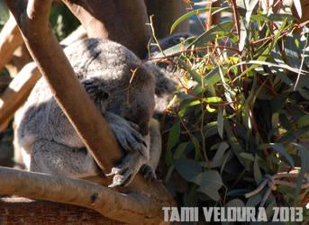 Zoo 19 by tamiveldura