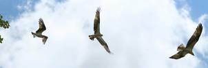 Osprey launch by markdow