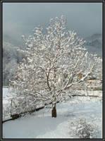 Snow by FuegoRojo