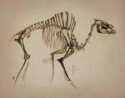 2016 Giant Prehistoric Camel by MinohKim